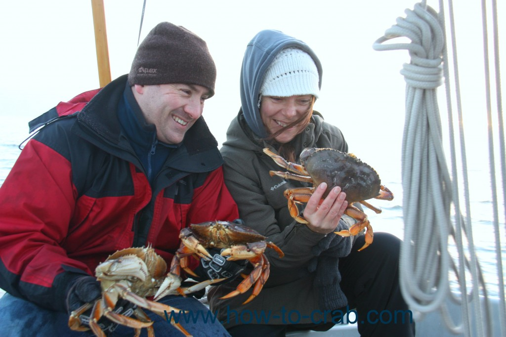 Holding fresh caught live crabs.