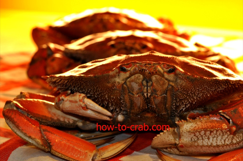 Types of crab